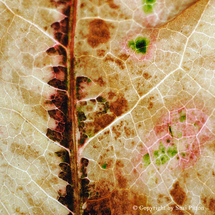 Autumn Leaf #005