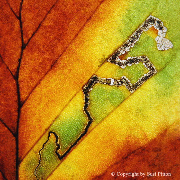 Autumn Leaf #012