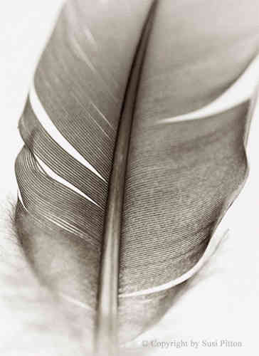 Feather #009