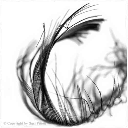 Black Feather #001