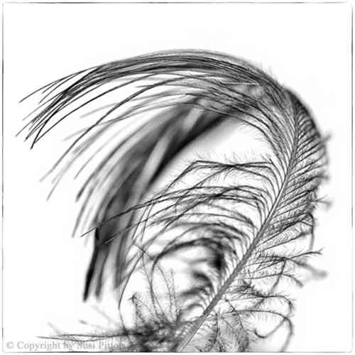 Black Feather #003